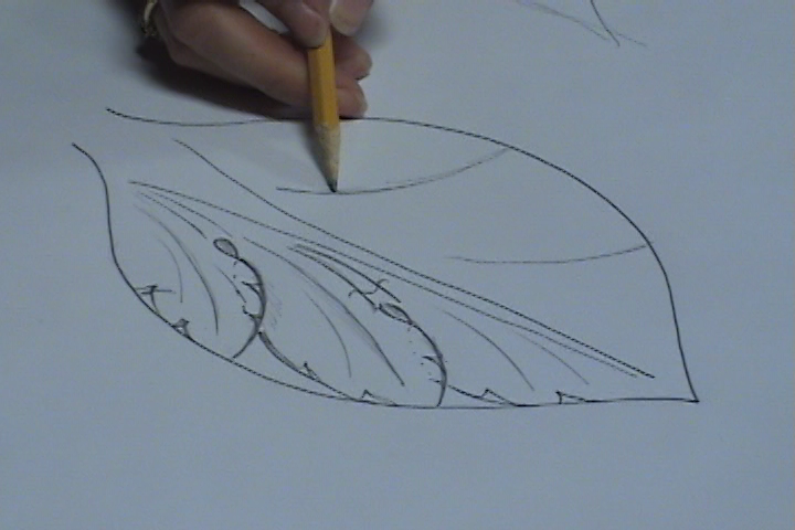 Drawing an Acanthus Leaf - Beginner Lesson #15 - Introduction
